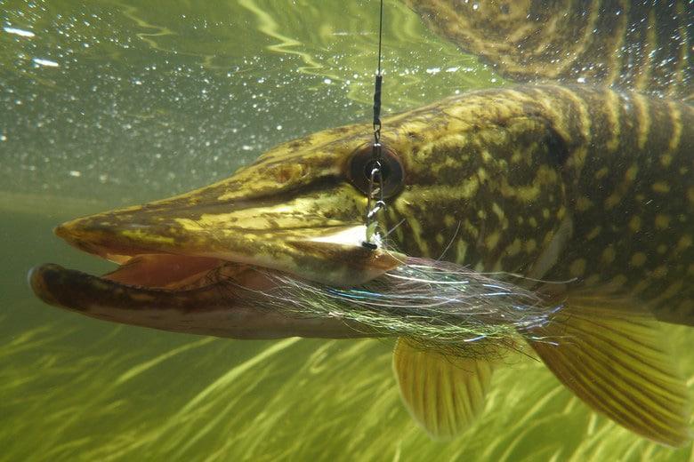 Les foreuses pour la pêche du prix sur oukraine
